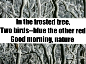 haiku about birds and nature